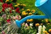 watering-flowers-2881595
